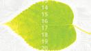grat-leaf